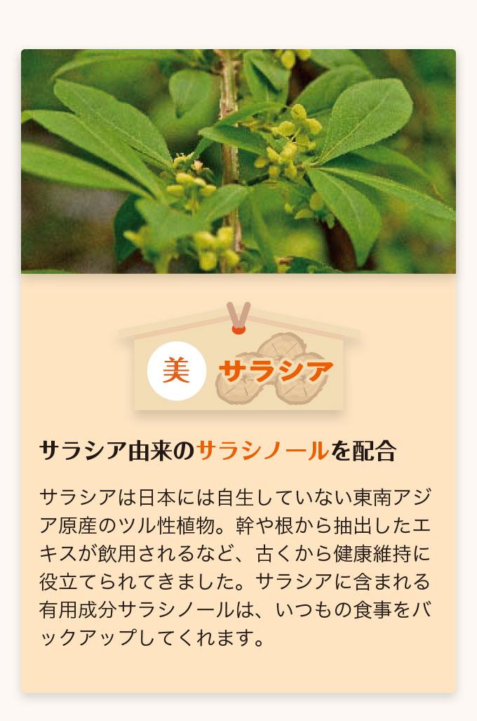 美 サラシア サラシア由来のサラシノールを配合